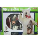 XiYou Educational Model 4D Educational Toy Educational Model for Anatomy and Medicine of White Bear